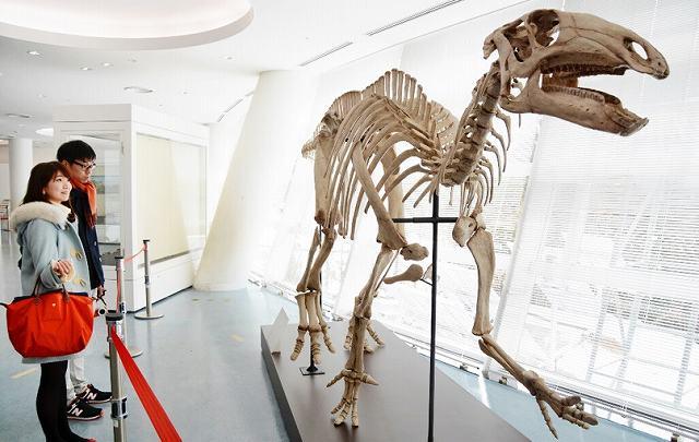 新種のイグアノドン類と認められたシリントーナ・コラーテンシスの全身骨格=30日、福井県勝山市の県立恐竜博物館