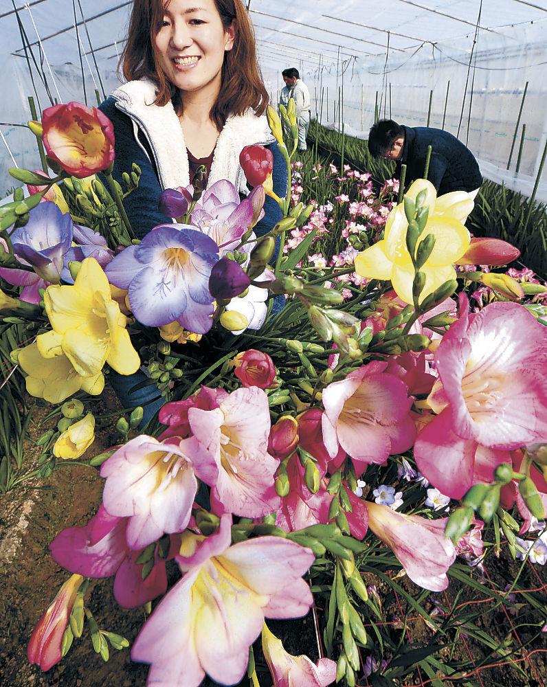 色とりどりの花を咲かせたエアリーフローラ=金沢市の県農林総合研究センター農業試験場