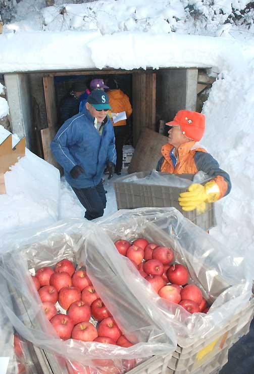 雪室にリンゴを運び込む「ほなみ村」の会員たち