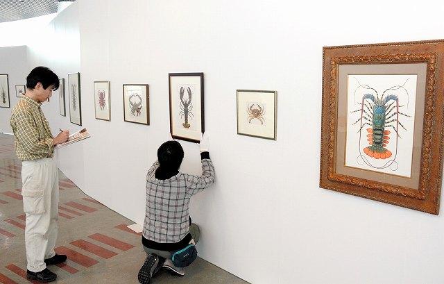 「美術の目でみる博物展」開幕に向けて準備が進む会場=18日、福井市美術館