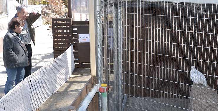 一般公開が始まったスバールバルライチョウの飼育施設