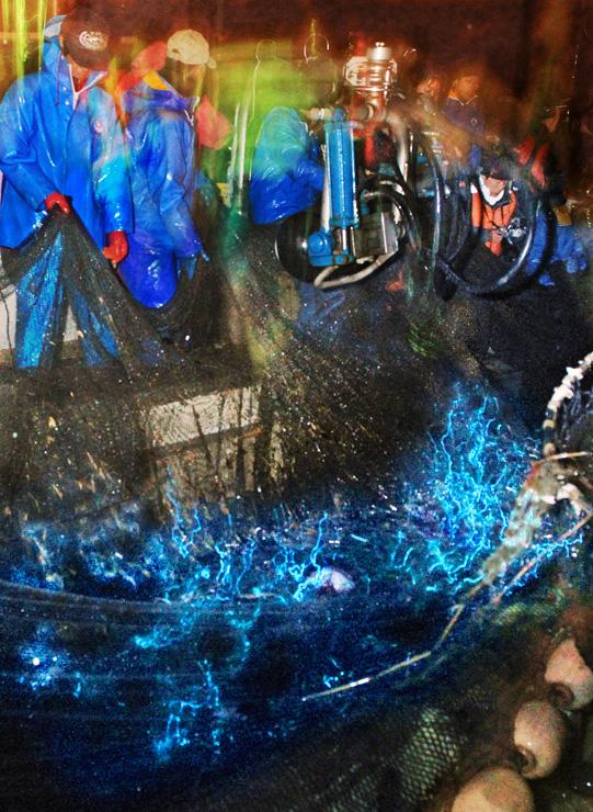 漁師が引く網の中で神秘的な青い光を放つホタルイカ=2日午前4時34分、滑川沖