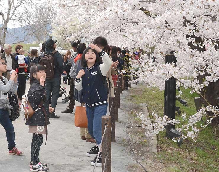 「上田城千本桜まつり」の期間中、桜を前に記念撮影を楽しむ花見客=昨年4月、上田城跡公園