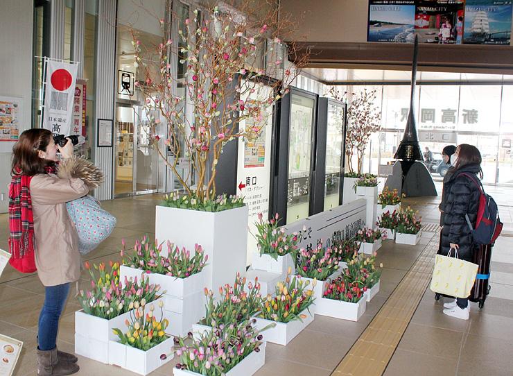 南北自由通路を彩るチューリップに見入る駅利用客=JR新高岡駅
