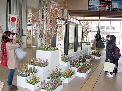高岡産チューリップ知って! 新幹線1周年で新高岡駅に設置