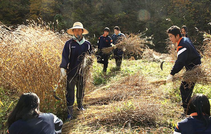 「ふるさと文化財の森」に選ばれた南砺市の相倉茅場。地元住民にとどまらず、ボランティアらの支援によって守られてきた=2014年10月