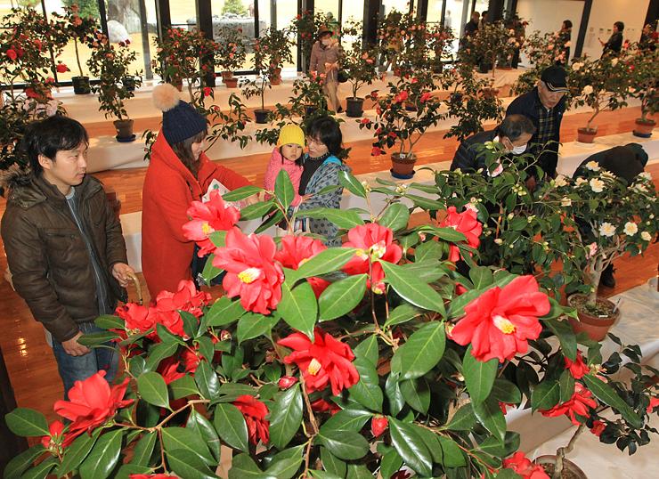咲き競う鮮やかな花に見入る大勢の来場者たち=いのくち椿館