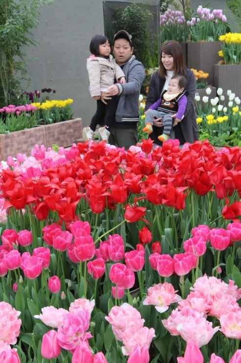 来場者に春を届けるチューリップ企画展=19日、新潟市秋葉区金津の県立植物園