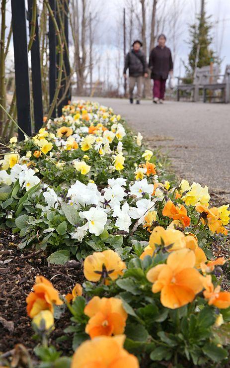 色とりどりの花が咲き始めた「みつけイングリッシュガーデン」=25日、見附市新幸町