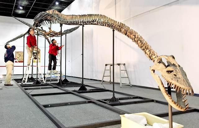 首長竜エラスモサウルスの全身骨格を組み上げる作業員=28日、福井県勝山市の県立恐竜博物館