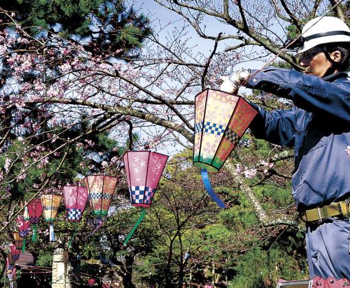 ぼんぼりを取り付ける作業員=29日午前9時20分、小松市の芦城公園