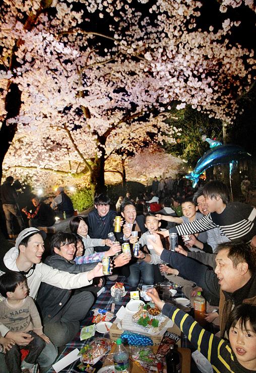 桜の下で乾杯する花見客=富山城址公園