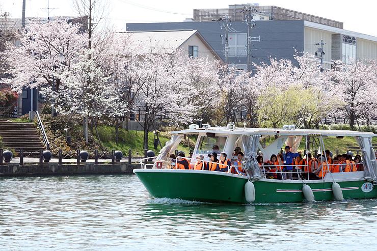 桜が彩る富岩運河を進む遊覧船=富山市下新西町