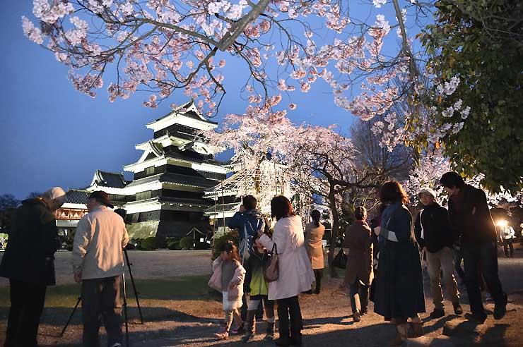 松本城本丸庭園で夜桜を楽しむ市民ら
