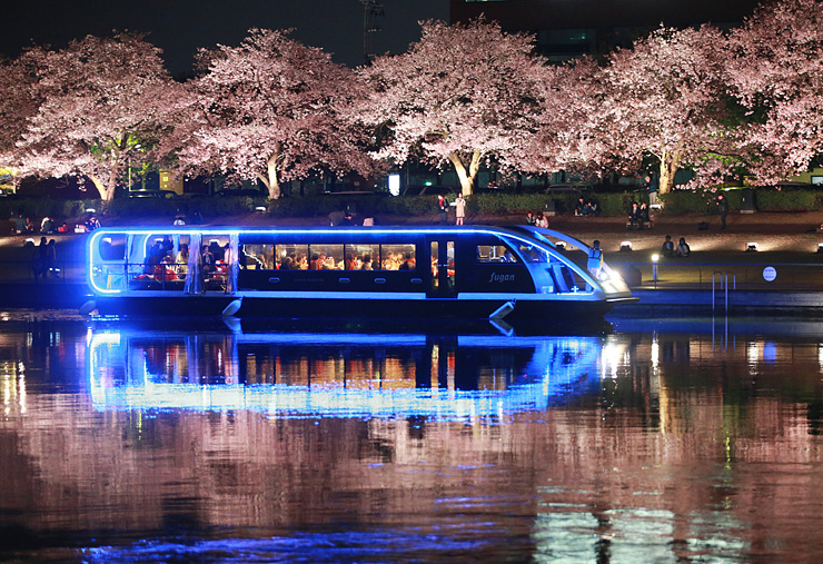 ライトアップされた桜並木のそばを運航する富岩水上ライン=富岩運河環水公園