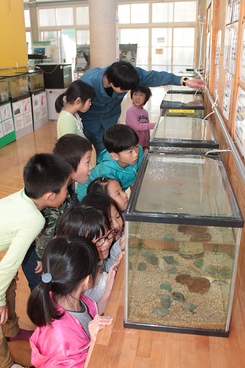 水槽の魚を観察する児童たち