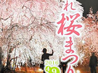 竹田のしだれ桜、満喫しよう ライトアップで幻想世界