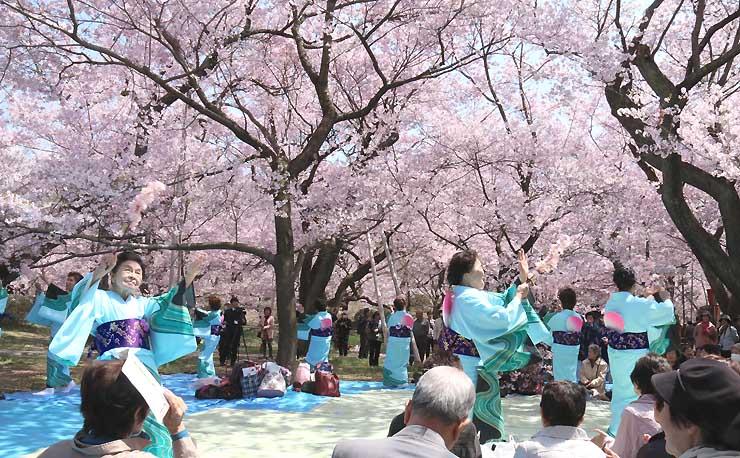 満開の桜の下で踊る山梨県韮崎市文化協会の舞踊部員たち=12日、伊那市の高遠城址公園