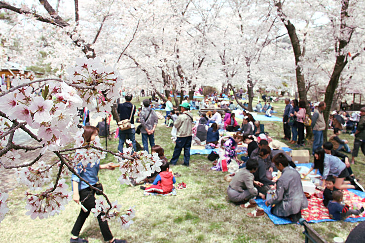 桜が舞い散る中、家族連れなど多くの人でにぎわう大西公園