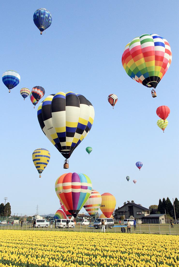 チューリップ畑のそばから次々と青空に浮かび上がる熱気球=砺波市中村