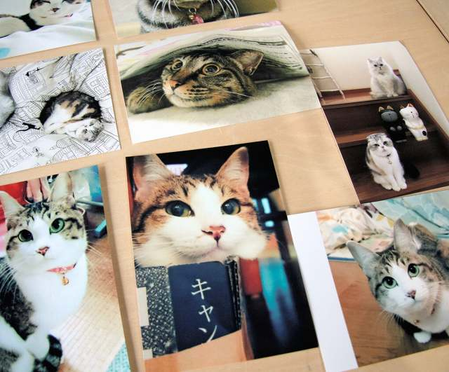 えきまえ猫祭りで開く「愛猫写真展」に寄せられた市民自慢の猫写真