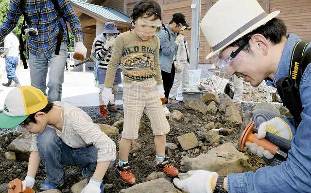化石を探し、ハンマーを振るう参加者=福井県勝山市