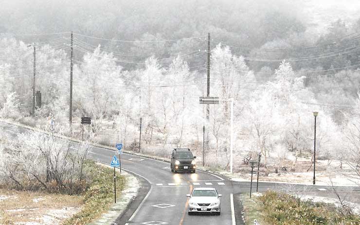 雪化粧した志賀高原。国道292号は凍結して滑りやすくなった=29日午後5時、山ノ内町