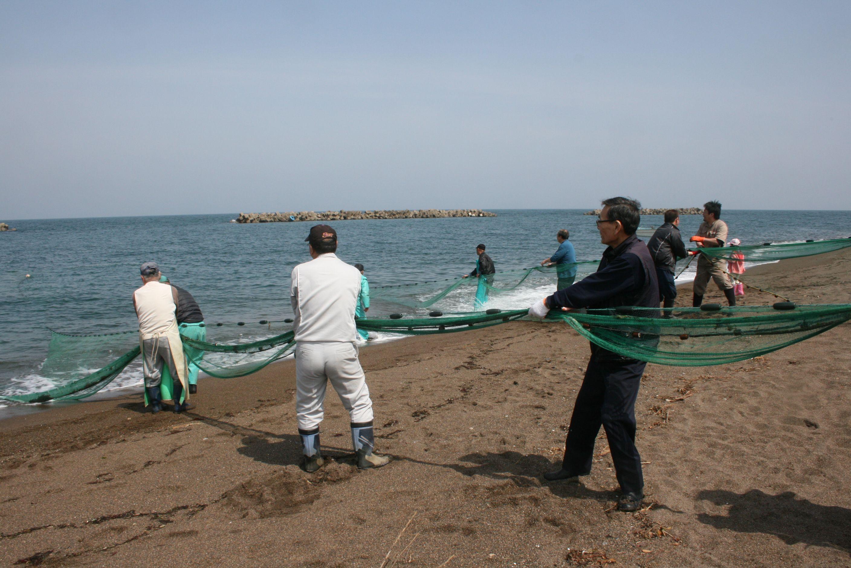 存続が決まった「観光地引き網」の予行練習で、力を合わせて網を引く鵜の浜温泉の旅館関係者