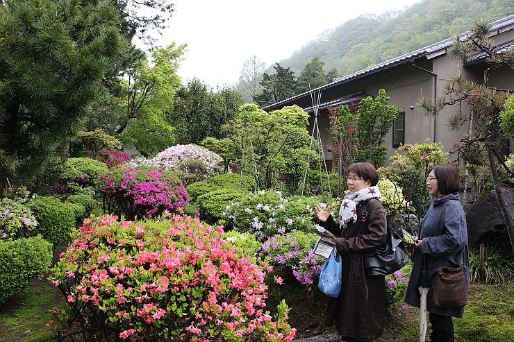 「城下町村上 春の庭 百景めぐり」で公開された庭を満喫する観光客=1日、村上市二之町