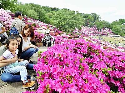ツツジと笑顔「満開」 鯖江市で西山公園まつり開幕