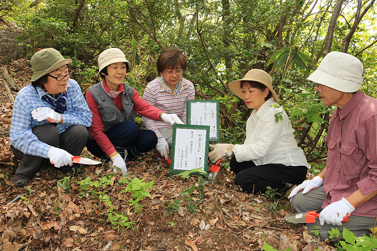 万葉植物が生えている場所に札を立てる山下さん(左から2人目)ら=高岡市の万葉植物園