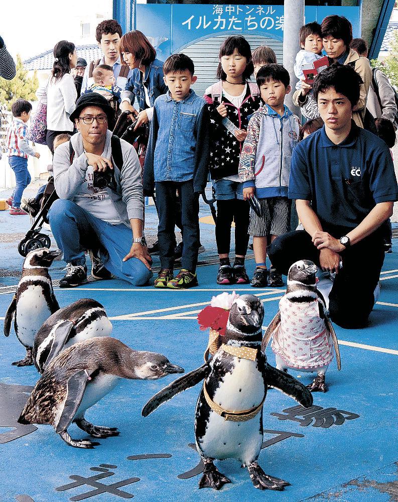 ペンギンの散歩に見入る来館者=七尾市ののとじま臨海公園水族館