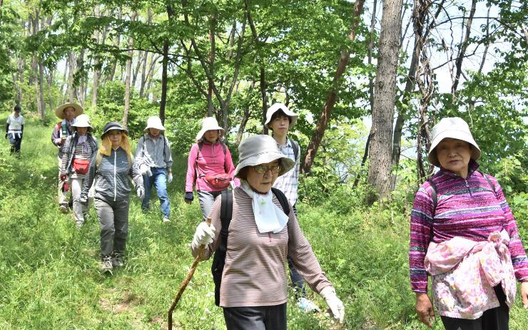 新緑の山道を歩く参加者ら