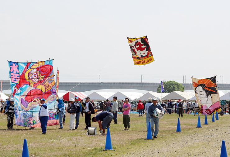 地元自治会が作った6畳以上の大凧が次々と揚げられた越中だいもん凧まつり=射水市大門カイトパーク