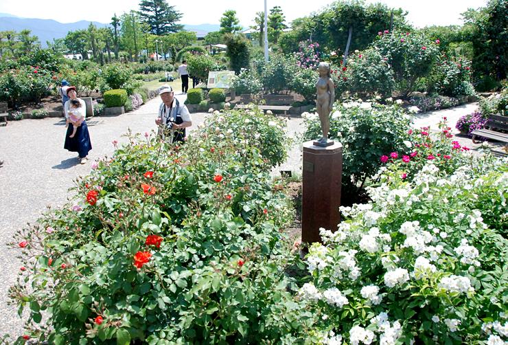 開花が早めでバラまつりのプレオープンをした中野市一本木公園