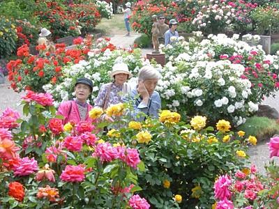 咲き競うバラ2500株 中野で祭り開幕