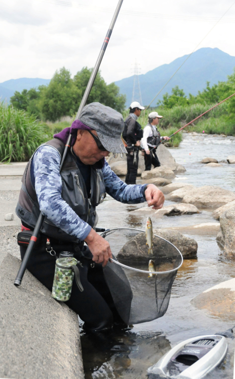 松川でアユの友釣りを楽しむ人たち