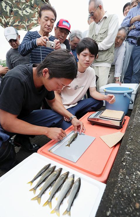 アユの体長や重さを計測する漁協職員=富山市婦中町塚原