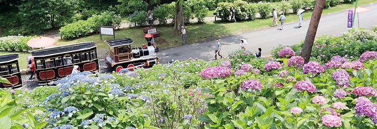 あじさい通りを散策して花を眺める来場者