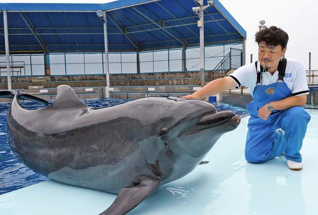 26日に20歳を迎えるラボと、長年見守り続けてきた松原さん=22日、福井県坂井市の越前松島水族館