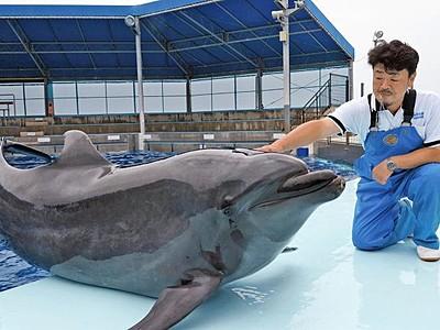 イルカのラボが20歳に 越前松島水族館、26日記念撮影会
