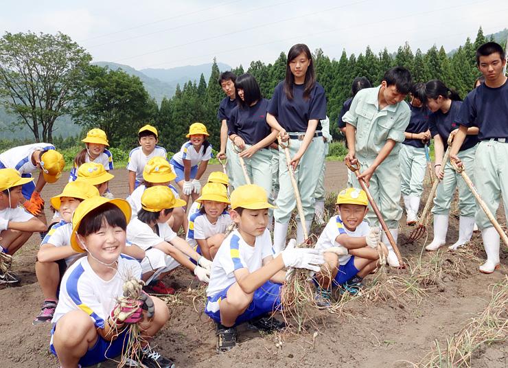 ラッキョウを収穫する児童と生徒