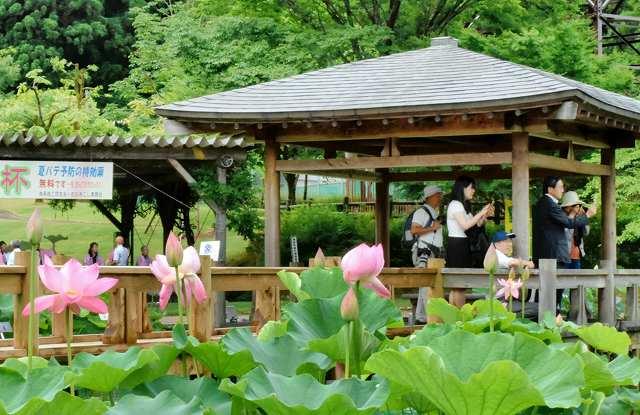 ピンクや白の花が彩る花はす公園で開幕した「はすまつり」=25日、福井県南越前町中小屋