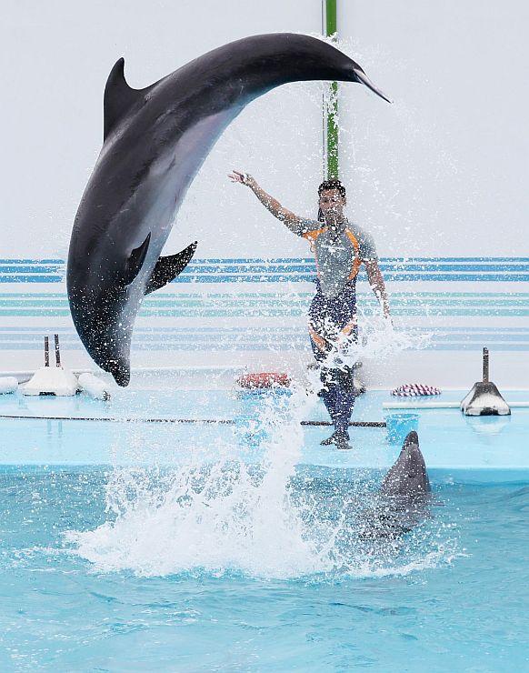 イルカが豪快なジャンプを披露したリハーサル=7日、上越市西本町4の市立水族博物館