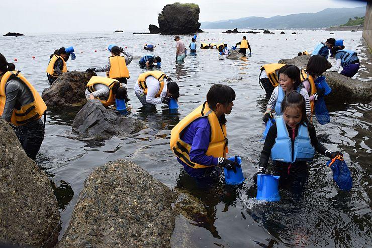 磯場でサザエ採りが体験できる「サザエファーム」=8日、糸魚川市能生小泊