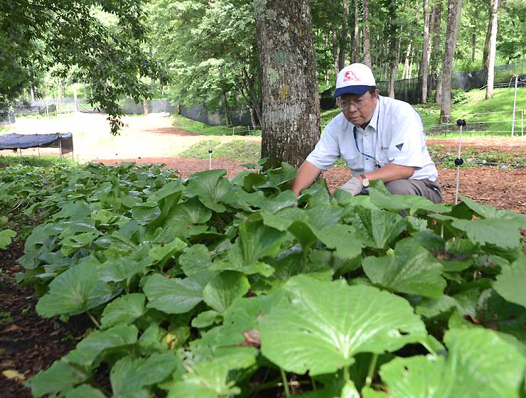 被災地ににぎわいをもたらそうと「白馬森のわさび農園」をオープンした田中さん
