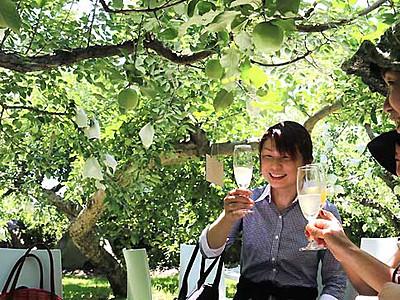 伊那産シードル、2年目販売開始 リンゴの下で乾杯