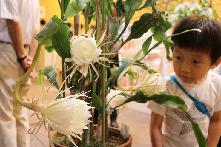 純白の大輪を咲かせたゲッカビジン=県中央植物園