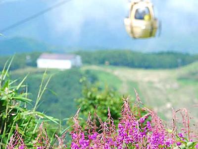 ヤナギラン、夏の高原に彩り 山ノ内の東館山高山植物園