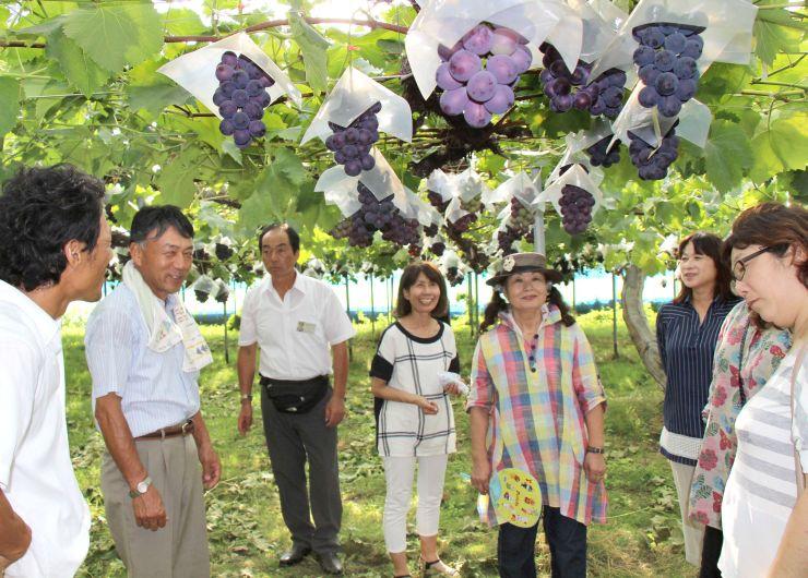 大きな実をつけたブドウを視察する農園主ら=1日、新潟市南区